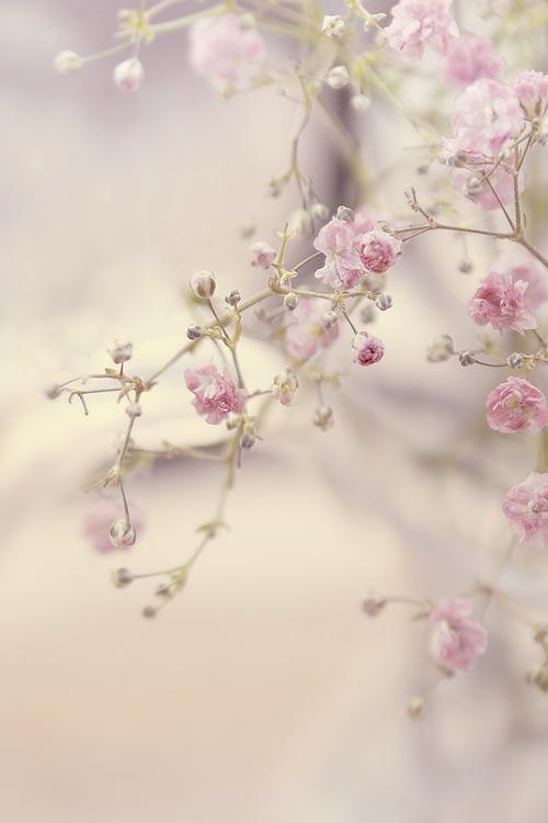 primavera Yo amo meditar